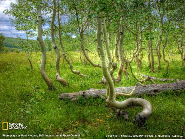 aspen grove oregon sw Les fonds décran du National Geographic