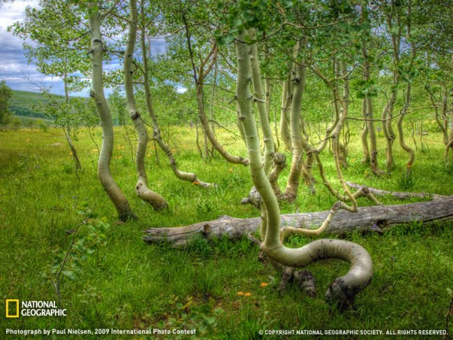 aspen-grove-oregon-sw