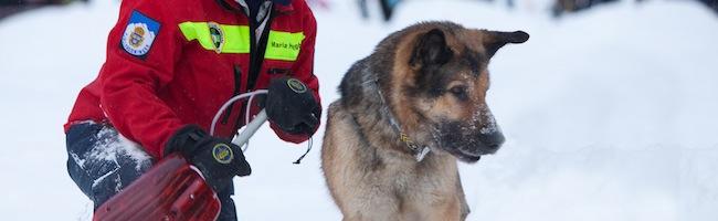 4396315120 93f29b095a b Un chien pour sauver les geeks en détresse