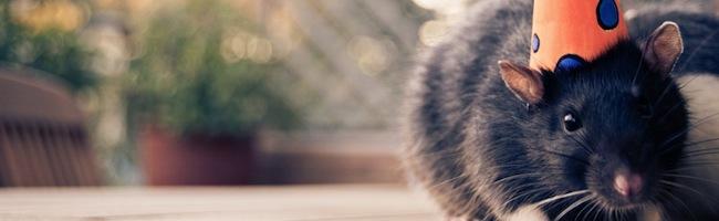 Des RATs qui camouflent leur trafic réseau