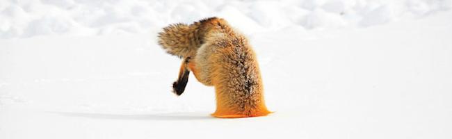 Corriger (temporairement) la fuite mémoire de Firefox – Korben