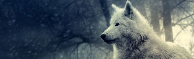 Wolf-wolves-29803367-1600-1200