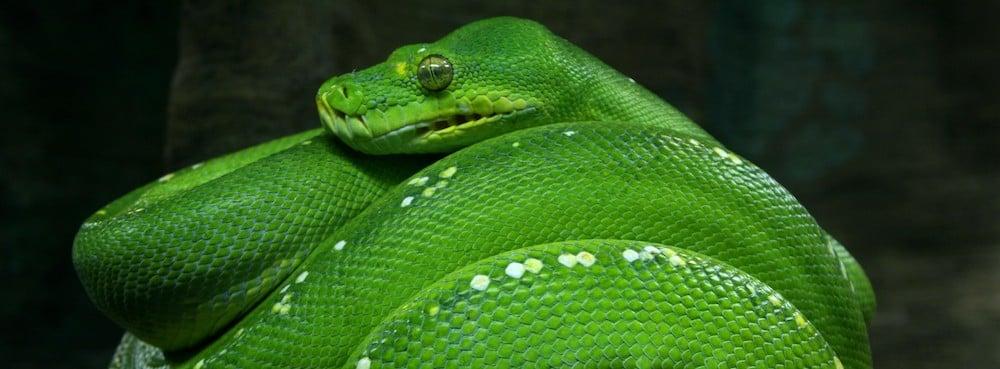 Thonny – Un IDE Python pour les débutants