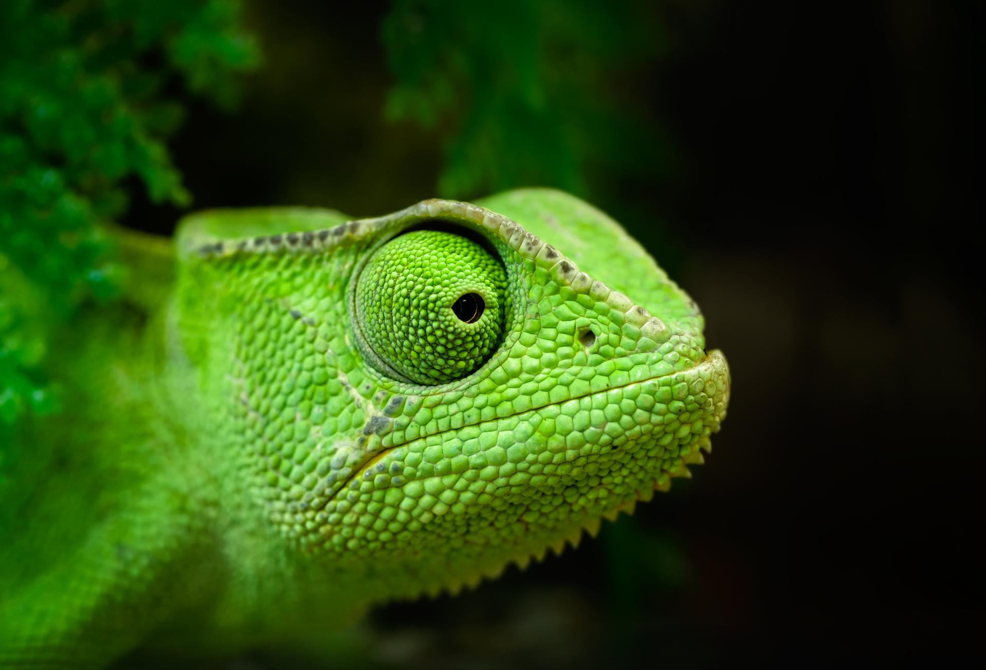 Chameleon – Une extension Firefox pour bloquer les méthodes de tracking non conventionnelles